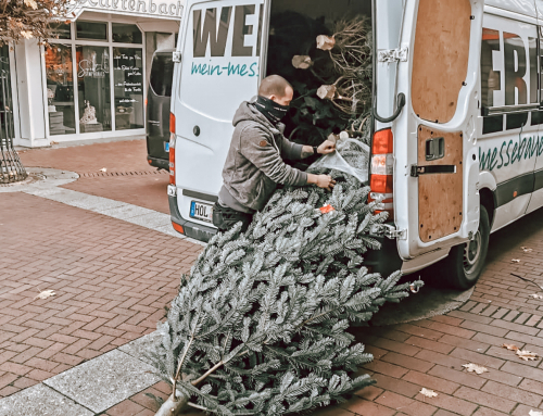 Weihnachtsbäume bei der Sparkasse