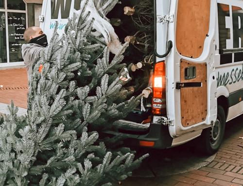 Weihnachtsbäume für die Sparkasse